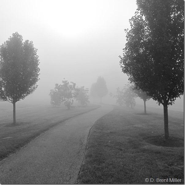 Foggy-path-1